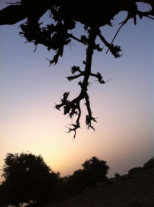 """"""" Baobab night """""""